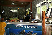 Ducks Diving Romblon