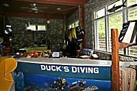 Ducks Diving Romblon