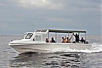 Maluku Divers