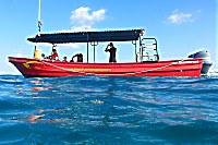 Pro Dive Allegro Playa del Carmen