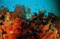 Korallenriff mit Weichkorallen