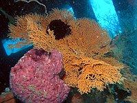 Viking Wrack im Roach Reef
